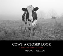Cows: A Closer Look